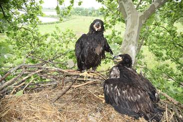 Masonville Cove Campus Fully Reopens After the Birth of Two Bald Eagles